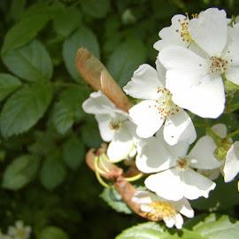 by Drago Ilisinovic - Novices Only Flowers & Plants