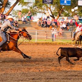 Calf roping by Scott Thomas - Sports & Fitness Rodeo/Bull Riding ( horse, cowboy, calf, calf roping, rodeo )