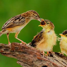 Too Big by MazLoy Husada - Animals Birds