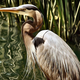 THE Great Blue Heron Painted by Anna Carneal - Digital Art Animals ( bird, reflection, blue heron, feathers, pond, reeds )