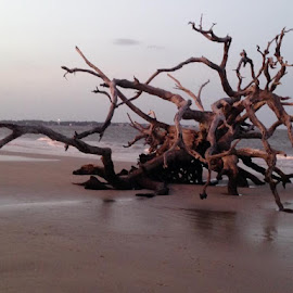 Driftwood Beach by Julie Sawicki - Nature Up Close Water ( water, sand, driftwood, wood, sunset, ocean, beach )