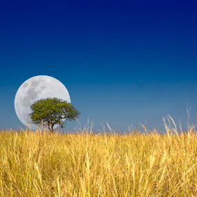 Moonrise Tree by Steven McGregor - Landscapes Prairies, Meadows & Fields ( moonrise tree )
