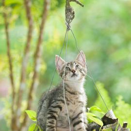 What? Sure I am a flower? by Annette Flottwell - Animals - Cats Kittens ( gato, mischief, verandah, kitten, cat, betises, outdoors, minou, chat, gatito,  )