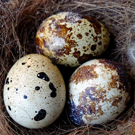 Bird nest and eggs  by Asif Bora - Nature Up Close Hives & Nests (  )