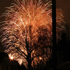 Firework tree by Jacques Marchand - Abstract Fire & Fireworks ( night photography, tree, firework, night )