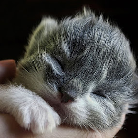 by Jane Bjerkli - Animals - Cats Kittens (  )