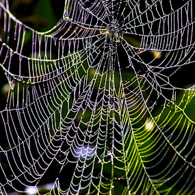 Web Shades  by Akash Deep - Nature Up Close Webs ( natural web design, colorful web, monsoon web, web with droplets, spider web )