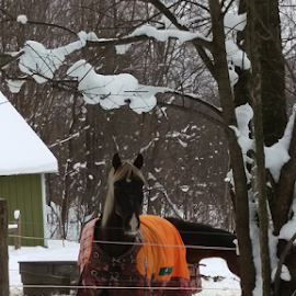 Coco by Tina Tippett - Animals Horses ( animals, horses,  )