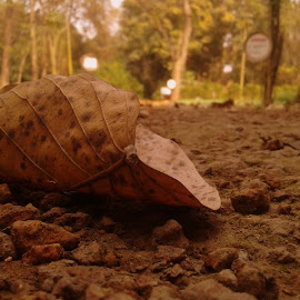 a leaf by Neil Mukhopadhyay - Instagram & Mobile Android