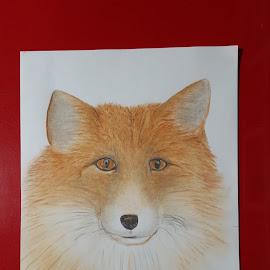 Red Fox by Paula Moore - Drawing All Drawing ( pencil, fox, art, 2b, softpastels, pencilart, artwork, drawing )