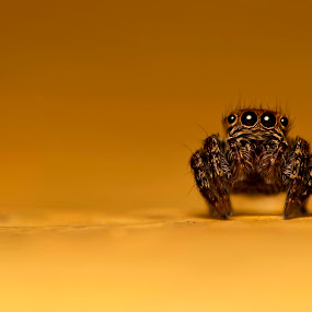 What's Up by Nadzli Azlan - Animals Insects & Spiders