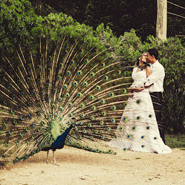 pavão by Tarcisio Soares - Wedding Bride & Groom ( wedding, bride, groom )
