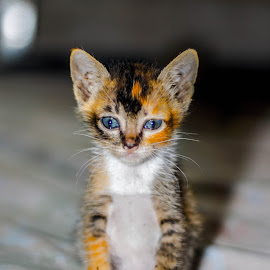Don't be sad by Kriswanto Ginting's - Animals - Cats Kittens ( kitten, nikon d3100, pixoto, 50mm, nikon )