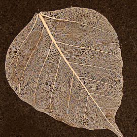 Holy Leaf by Sue Matsunaga - Nature Up Close Leaves & Grasses