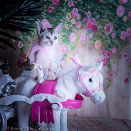 kitten princess by Rita Bruche - Animals - Cats Kittens ( digital, pink, fantasy, kitten, white, aby, silver, luna, photography, pony, kitty )