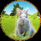 Real Rabbit Hunting