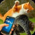 Tease Cat Provocation Fighting APK for Bluestacks