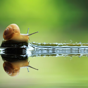 snail on the way by Said  Ikhsan - Animals Other ( #macro #micro #animals #nature #indonesian )