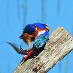 wild birds by Geraldine Angove - Animals Birds (  )