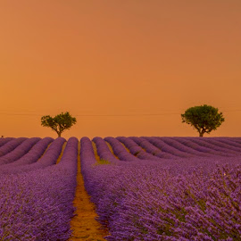 Purple Passion  by Stanley P. - Landscapes Prairies, Meadows & Fields