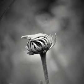 Growing alone by Brant Stevenson - Nature Up Close Other plants ( macro, nature, black and white, growing, flower )