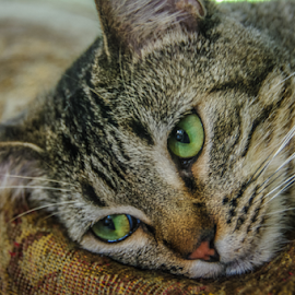 Cat with Green Eyes by Myra Brizendine Wilson - Animals - Cats Portraits ( cats, cat, pet, pets, green eyes, feline,  )