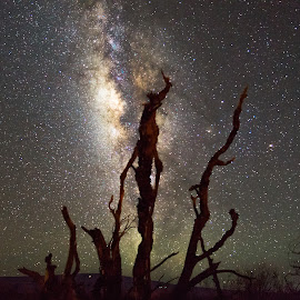 When Dead Trees Walk by Brian Mabry - Artistic Objects Other Objects ( astrophotography, dead tree, hawaii, nightscape, milky way )