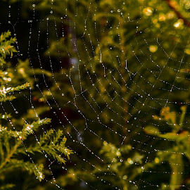 by Thomas Thain - Nature Up Close Webs