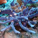 Blue Branched Sponge
