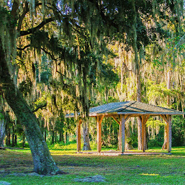 Southern Charm by Joan Sharp - Digital Art Places ( moss, canopy, florida, trees, landscape, park,  )