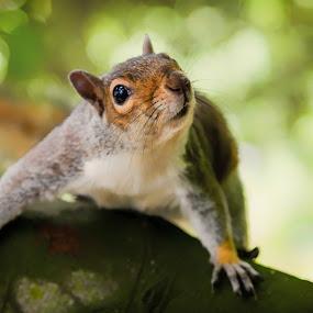 squirrel by Martin Tyson - Animals Other ( scarborough, park, martin tyson, wildlife, peasholm, squirrel, animal )