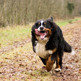 Dog In action by Joyce Dales - Animals - Dogs Running ( dog running netherland wood )