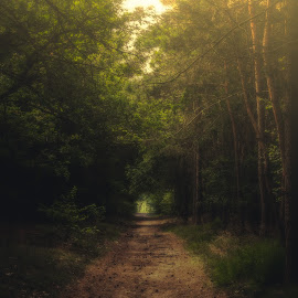 Coming true. by Wilma Heuvel - Landscapes Forests ( maashorst, forrest, tree, netherlands, sun )