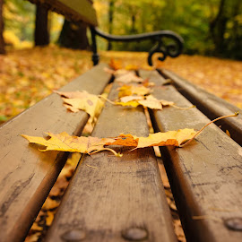 Leaves on bench by Witold Steblik - Nature Up Close Leaves & Grasses ( macro, nature, park, bench, autumn, yellow, leaves )
