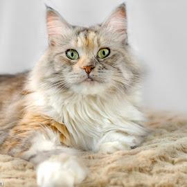 by Vicki Johnson - Animals - Cats Portraits