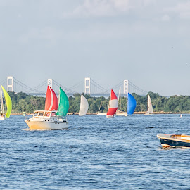 Sailboat Races in Annapolis by Carol Ward - Transportation Boats ( water, annapolis, sailboats, waterscape, boats, annapolis md, transportation )