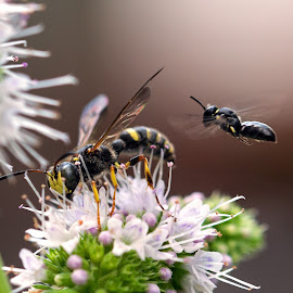 by Judy Florio - Animals Insects & Spiders ( macro, wings, mint, insects, flower )