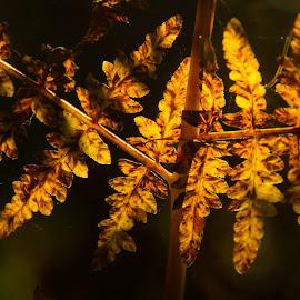 Autumn Bracken by Doug Faraday-Reeves - Nature Up Close Leaves & Grasses ( fern, autumn, bracken )
