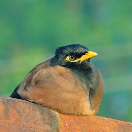 by Asif Bora - Animals Birds