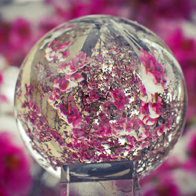 Signs of Spring by Logan Knowles - Artistic Objects Glass ( distortion, sphere, pink, crystal, flower,  )