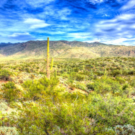 Saguaro Forest by Cal Brown - Landscapes Deserts ( national park, desert, cacti, travel location, arizona, tucson, landscape, travel photography )