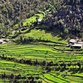 Step Cultivation by Sutanu Mukherjee - Landscapes Travel ( paddy field, mountain village, steps, crop, fields,  )