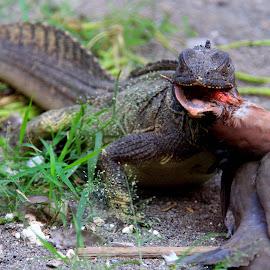 Breakfast by Zlatan Dawamovic - Animals Reptiles