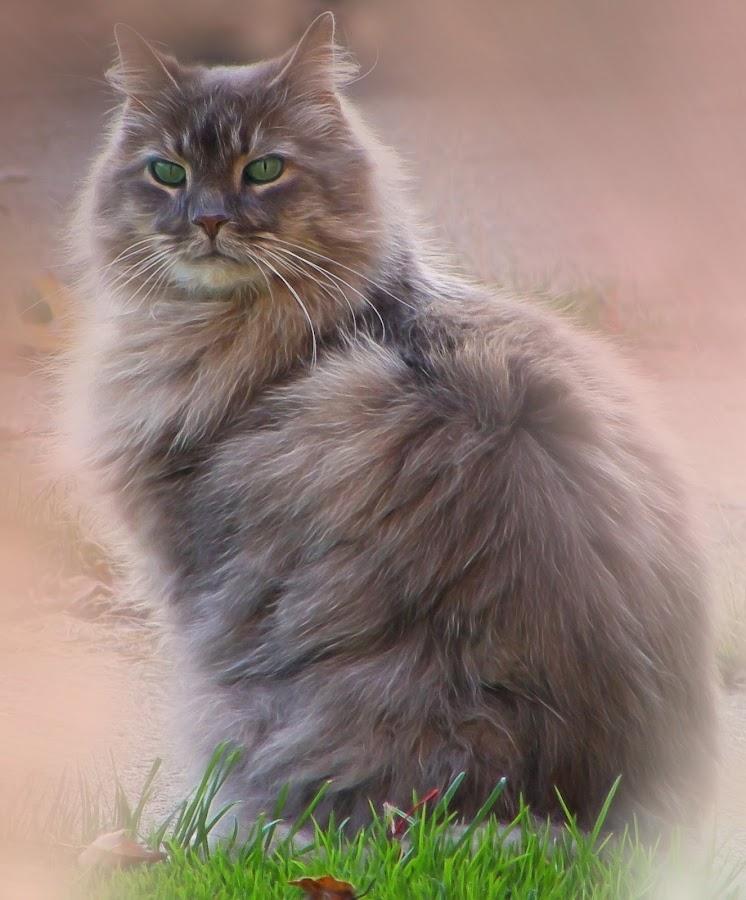 Feline Friendly by Millieanne T - Digital Art Animals