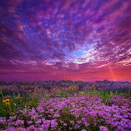 Peace That Surpasses All Understanding by Phil Koch - Flowers Flowers in the Wild ( field, sky, twilight, art, meadow, landscape, light, sun )
