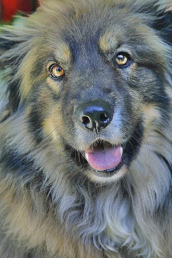 by Edwin   S. Loyola - Animals - Dogs Portraits