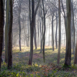 Morning Woods by Ceri Jones - Landscapes Forests ( winter, oxfordshire, trees, forest, woodland, woods )