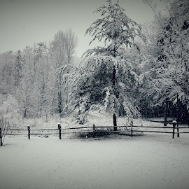 Winter at Home by Dana Marshall - Instagram & Mobile Android