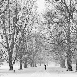 Winter Walk by Caleb Daugherty - Landscapes Weather