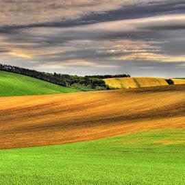 Fields, South Moravia by Darja Pavlacká - Landscapes Prairies, Meadows & Fields ( south moravia, fields )